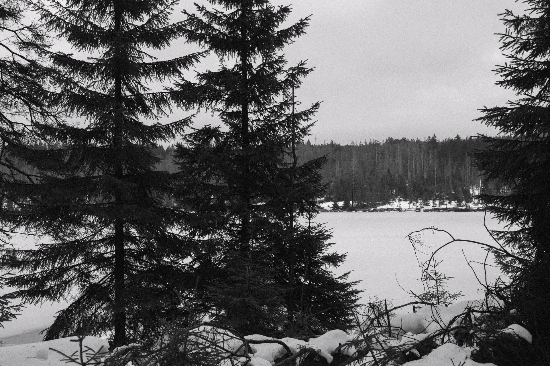 Paarfotos im Schnee – Harz